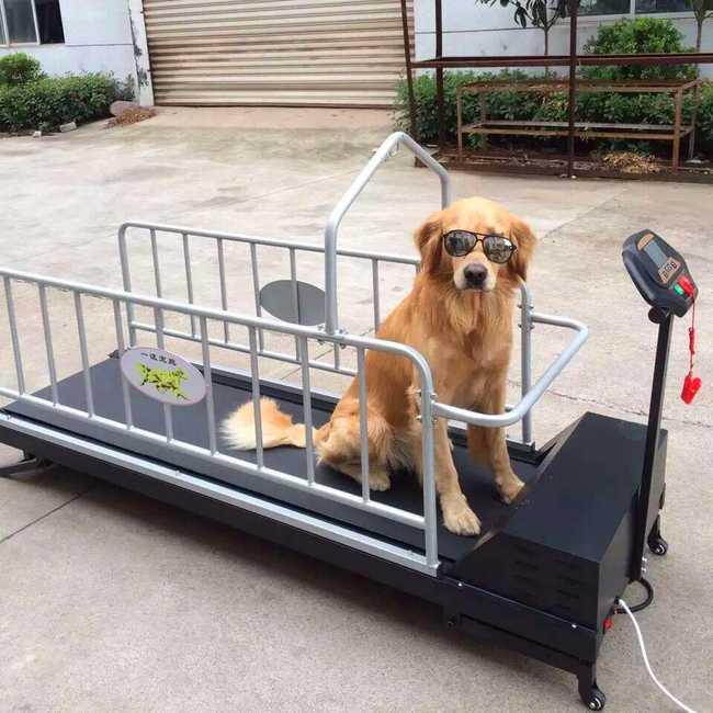 Беговые дорожки для собак