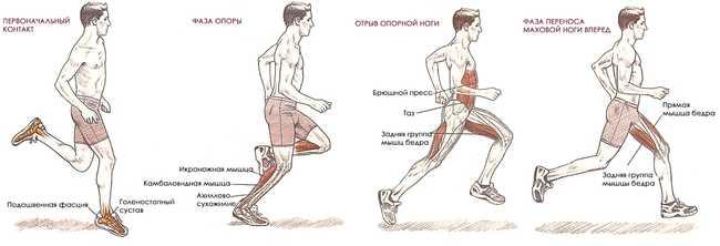 Какие группы мышц тренирует дорожка