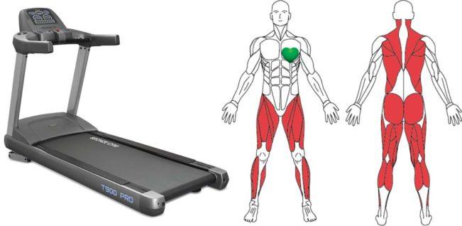 Какие мышцы работают на беговой дорожке