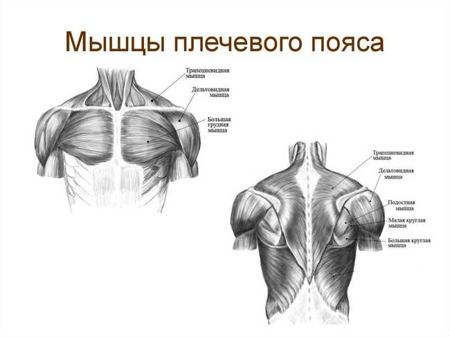 Мышцы плечевого пояса при беге на беговой дорожке