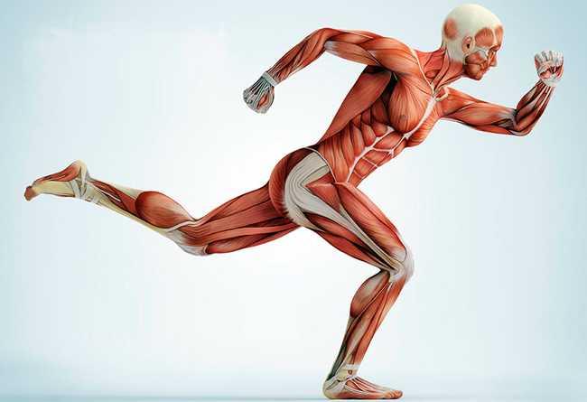 Беговая дорожка: какие мышцы работают